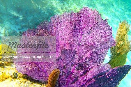 Caribbean coral reef Mayan riviera colorful species underwater treasure