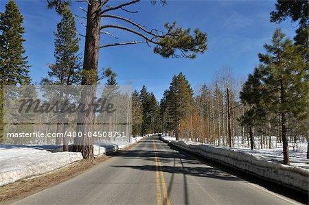 Road through the Ponderosa pines near South Lake Tahoe, California