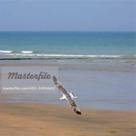 The white seagull flies over a beach