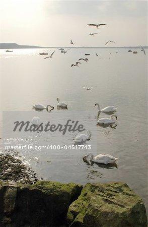 birds at sunset on a british tidal estaury