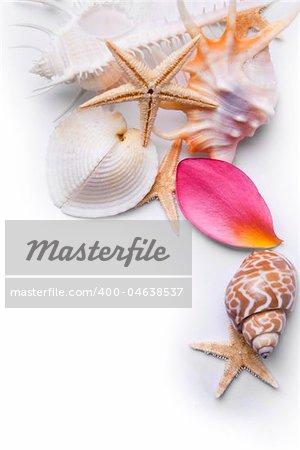 Starfish seashells and pink frangipani petals over a white background