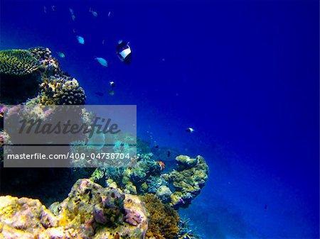 under water world at Maldives blue clear sea