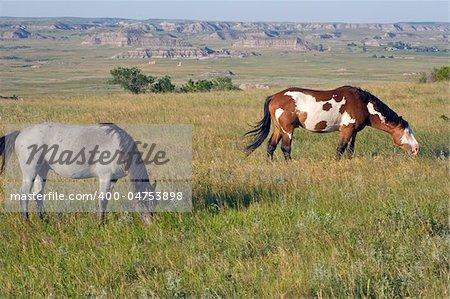 Wild Horses in Theodore Roosevelt National Park, North Dakota.