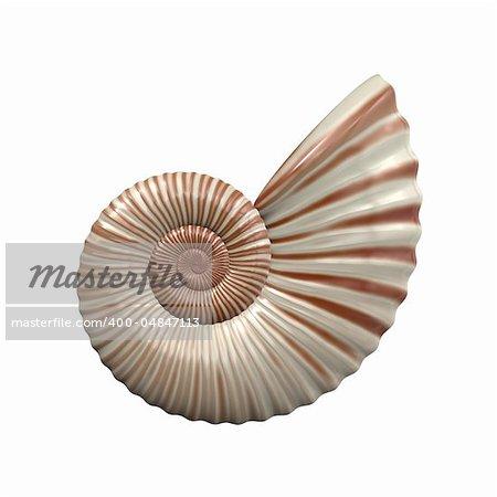 An image of a nice sea shell