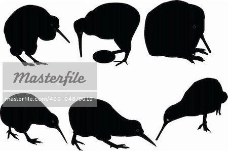 kiwi birds collection - vector