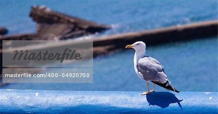 an  aquatic bird resting on a clean environment