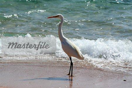 Bird near the sea. The large white bird and beautiful sea wave