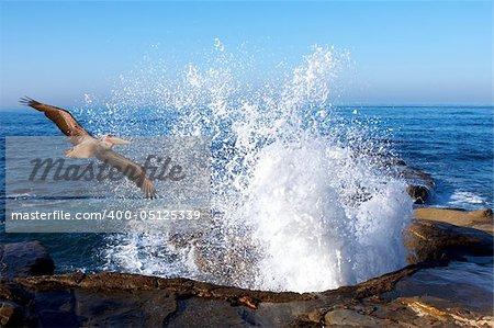 Pacific Pelican Soaring Through Splashing Ocean Waves