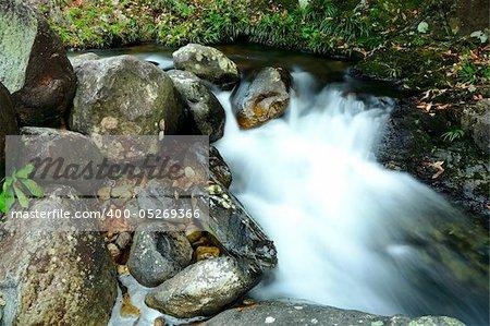 stream in jungle