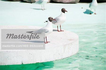 Shot of seagulls sitting near the water