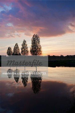 Leafless tree near lake on sunset background sky
