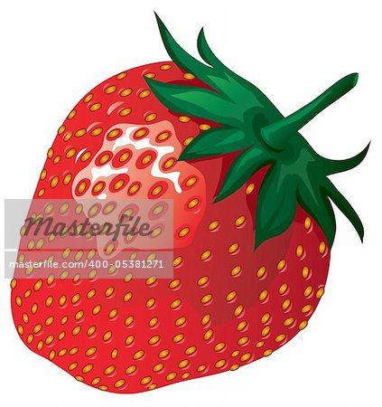strawberry vector illustration isolated on white background