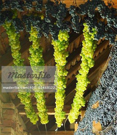 grapes drying for straw wine, Biza Winery, Cejkovice, Czech Republic