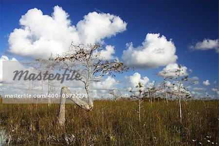 Scenic Landscape in Everglades National Park, Florida