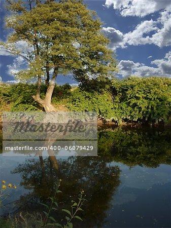 Beautiful landscape. Green tree on blue sky background
