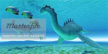 Two Sea Dragon fight over territory while three Redfin Angelfish swim away.