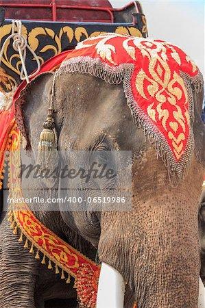thai elephant show in thailand
