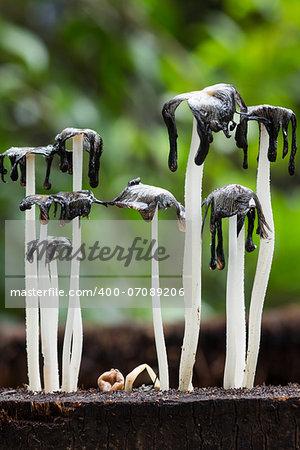 Macro photography of dead  mushrooms  on dead tree