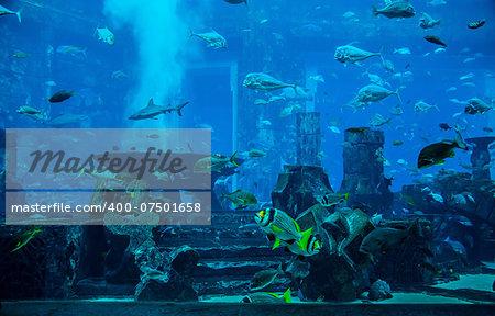 Photo of a tropical fish on a coral reef in Dubai aquarium. Stingray fish