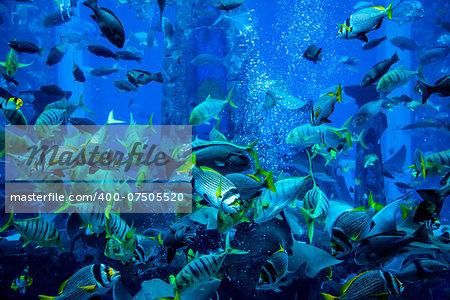 Photo of a tropical fish on a coral reef in Dubai aquarium