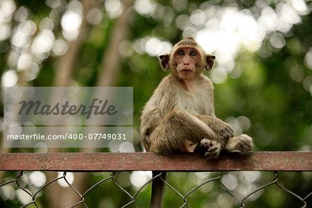 The child of monkeys. Cambodia