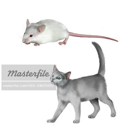 gray kitten walks against white background, British kitten