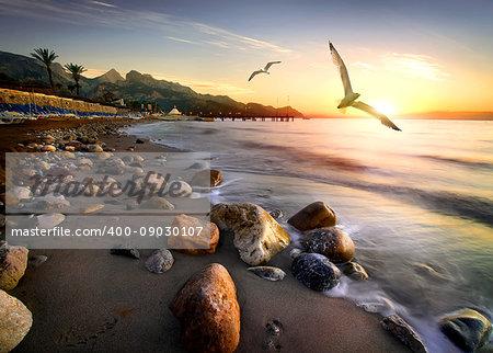 Seagulls flying over beach in Mediterranean sea at sunset, Turkey