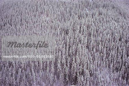 Manning Provincial Park British Columbia, Canada