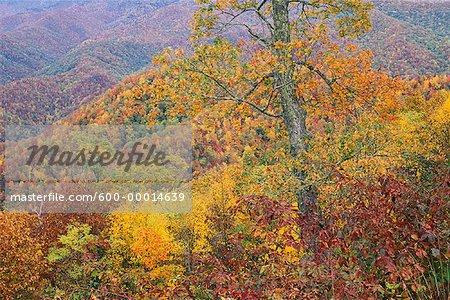 Fall Landscape View From Blue Ridge Parkway North Carolina, USA