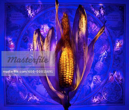 Ear of Dried Corn