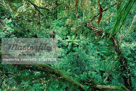 Tropical Rainforest Amazon Basin Napo Province, Ecuador