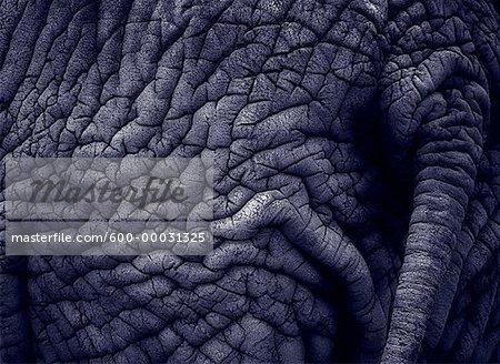 Close-Up of Elephant's Back
