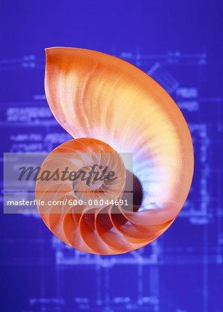 Nautilus Shell and Blueprints