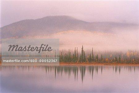 Fog over Trees and Mountains Tetlin National Wildlife Refuge Alaska, USA
