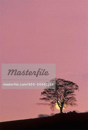 Silhouette of Tree at Sunset, New Brunswick, Canada