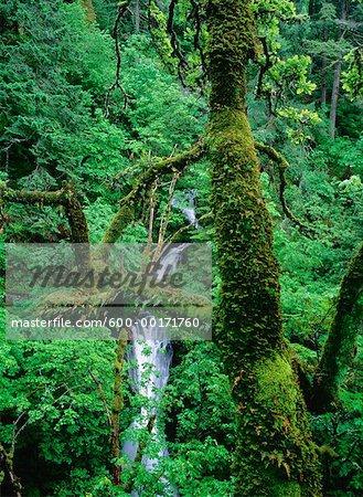 Shepperd's Dell Falls, Columbia River Gorge, Oregon, USA