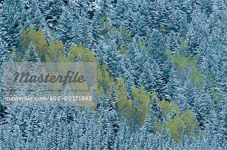 Winter Scenic, Banff National Park, Alberta, Canada