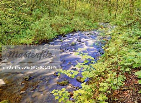 River Through Forest Oregon, USA