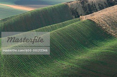 Fields near Colfax, Washington, USA