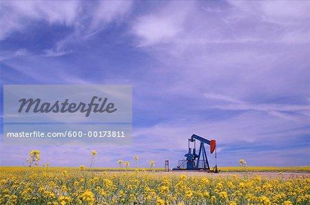 Oil Pump Jack In Canola Field, Saskatchewan, Canada