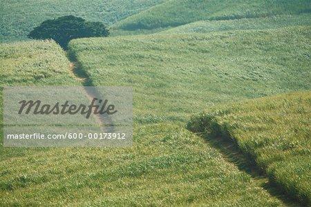 Road Through Sugar Cane Field, Zululand, Natal, South Africa