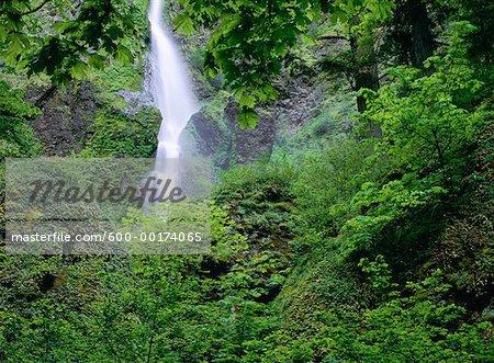 Starvation Creek Falls, Columbia River Gorge, Oregon, USA