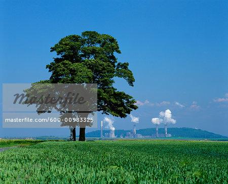 Tree in Field, Brown Coal Power Plant In Background, Neurath near Grevenbroich, Germany