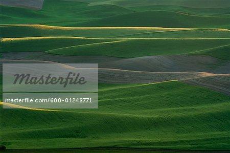 View From Steptoe Butte, Palouse Region, Whitman County, Washington, USA