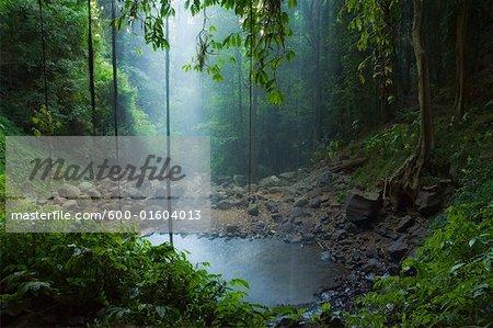 Crystal Shower Falls, Dorrigo National Park, New South Wales, Australia