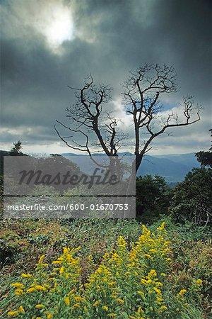 Scenic View, Blue Ridge Parkway, North Carolina, USA