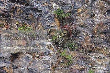 Rock Face, Blue Ridge Parkway, North Carolina, USA