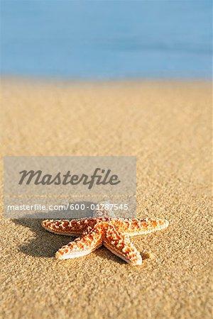 Starfish on Beach