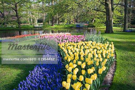 Tulips and Hyacinths, Keukenhof Gardens, Netherlands