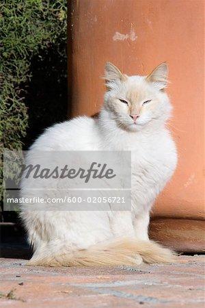 Portrait of Cat, San Miguel de Allende, Guanajuato, Mexico